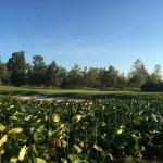 Acquafert irrigazione campi da golf Modena Golf e Country Club (6)